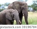 塞倫蓋蒂國家公園 動物 陸生動物 39196784