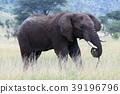 塞倫蓋蒂國家公園 動物 野生動物 39196796