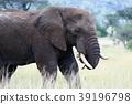 塞倫蓋蒂國家公園 動物 野生動物 39196798
