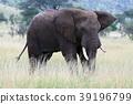 塞倫蓋蒂國家公園 動物 野生動物 39196799