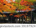 ต้นเมเปิล,ชิกะ,ฤดูใบไม้ร่วง 39197924