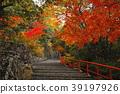 ต้นเมเปิล,ชิกะ,ฤดูใบไม้ร่วง 39197926