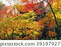 ต้นเมเปิล,ชิกะ,จุดสนใจ 39197927