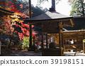 ต้นเมเปิล,ฤดูใบไม้ร่วง,ประเทศญี่ปุ่น 39198151