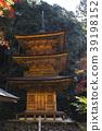 ต้นเมเปิล,ฤดูใบไม้ร่วง,ประเทศญี่ปุ่น 39198152