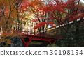 ต้นเมเปิล,ฤดูใบไม้ร่วง,ประเทศญี่ปุ่น 39198154