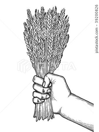 Graphic hand with malt bunch 39200826