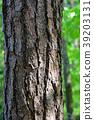 南欧黑松 树干 茎 39203131