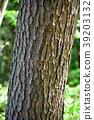南欧黑松 树干 茎 39203132