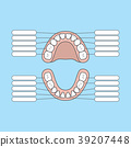 Tooth Chart Primary teeth Blank vector 39207448