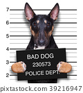 mugshot dog at police station 39216947