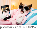 dog, salon, selfie 39216957