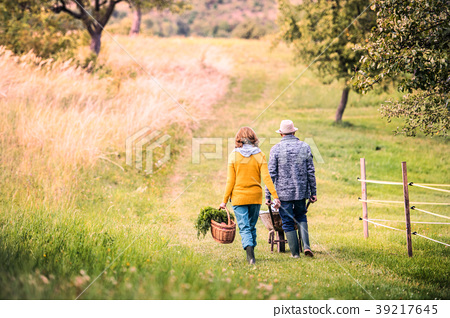 Senior couple with grandaughter gardening in the 39217645