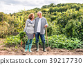 Senior couple gardening in the backyard garden. 39217730