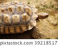 烏龜 龜 長壽 39218517