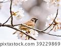 small, bird, sparrow 39229869