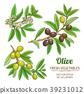 olive branches vector set 39231012