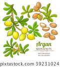 argan, vector, branch 39231024