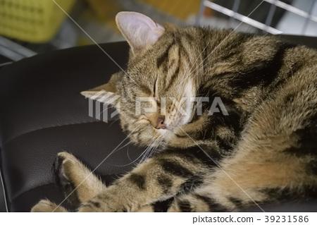 Neko, cat 39231586