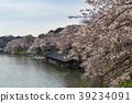 치도리가 후치 주변의 벚꽃 (도쿄도) 39234091