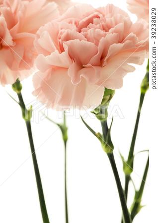 母親節,彌生薰,情人節,母親節,康乃馨,情人節,母親節 39238029