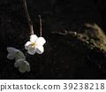 벚꽃 39238218