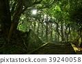 หินของจังหวัดชิมาเนะย่างก้าวเข้ามาและแสงแดดในป่า 39240058