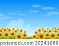 flower, garden, field 39241069