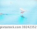 鸭子飞起来 39242352