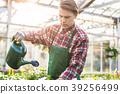 watering, houseplants, young 39256499