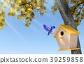 Blue bird nesting in wooden birdhouse 39259858