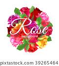 玫瑰 玫瑰花 背景 39265464