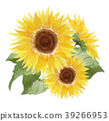 sunflower, sunflowers, flower 39266953