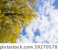 은행나무, 푸른 하늘, 파란 하늘 39270578