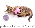 Threaded games. cat poster. 39272751