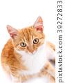 cat kitten animal 39272833