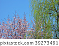 willow, willows, tree 39273491