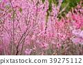 꽃, 플라워, 복숭아 39275112