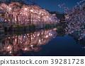 벚꽃, 라이트업, 야간 관람 39281728