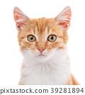 cat kitten animal 39281894