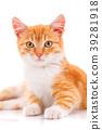 cat kitten animal 39281918