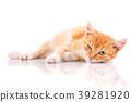 cat kitten animal 39281920