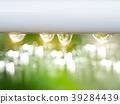 Water drop in the rain season 39284439