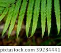 Close up fern leaves. 39284441