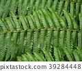 Close up fern leaves. 39284448
