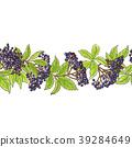 elderberry, background, leaf 39284649