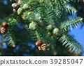 잎, 푸른, 배경 39285047