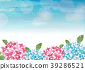 hydrangea, background, bloom 39286521