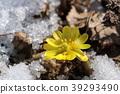 花朵 花 花卉 39293490