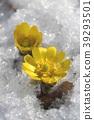 花朵 花 花卉 39293501